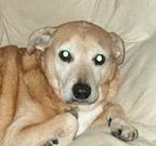 original dog photo